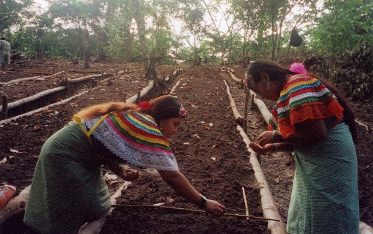 Chiapas-Mexico_ladies-farming