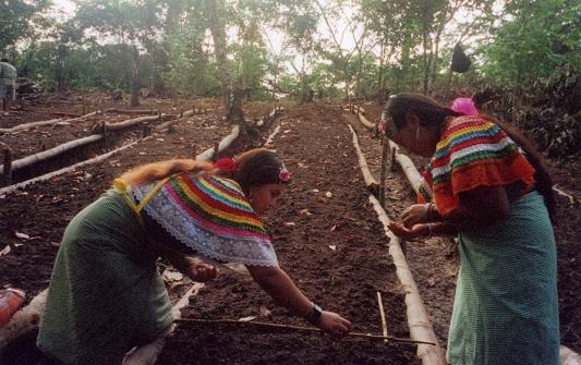 Chiapas-Mexico_ladies-farming