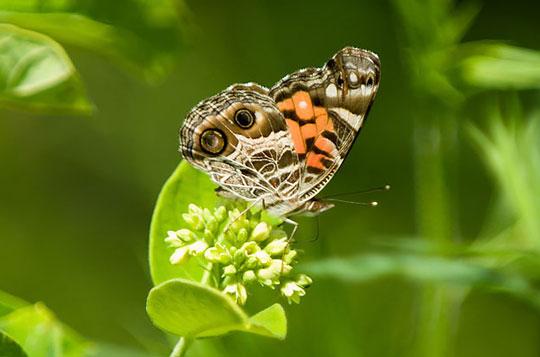 Biodiversity - Biopolicy