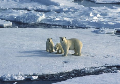 Climate Change - Polar Bears